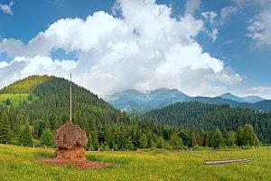 Summer mountain meadow