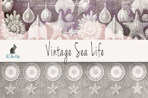 Vintage Sea Life Digital Papers