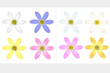 Set of Petal Flower.