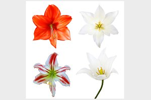 Set flowers. Photo-realistic Vector