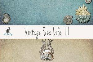 Vintage Sea Life III Papers