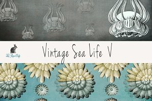 Vintage Sea Life V Papers