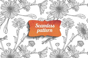 Chamomile seamless pattern. Vector