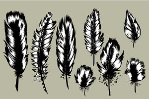 8 Hand Drawn Feathers set.