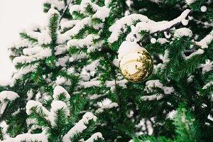 christmas ball on green tree