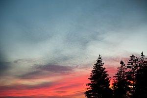 Sunset + Pines