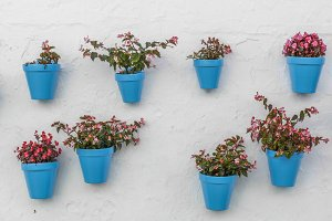Blue flowerpot on a wall