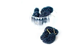 fresh mulberry 1.jpg