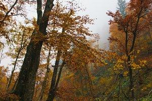 Vintgar gorge on a misty morning
