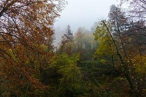 Misty forest on an autumn day