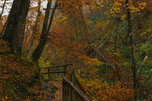 Forest path in autumn on a misty day