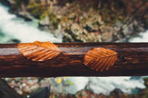 Two autumn leaves on a wooden fence