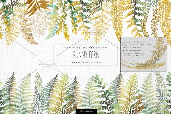 Sunny fern. Tropical forest.