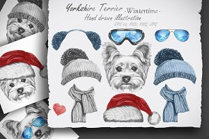 Yorkshire terrier / Wintertime