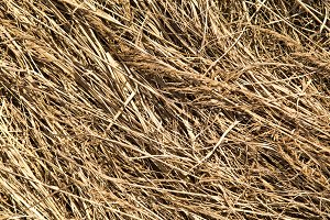 dried yellow grass background