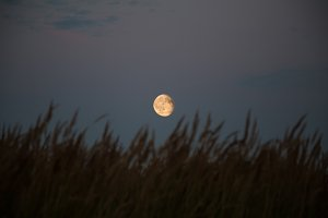 silhouette grass on full moon backgr