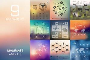9 mammals infographics