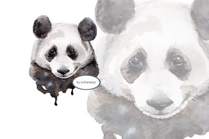 Panda. Watercolor