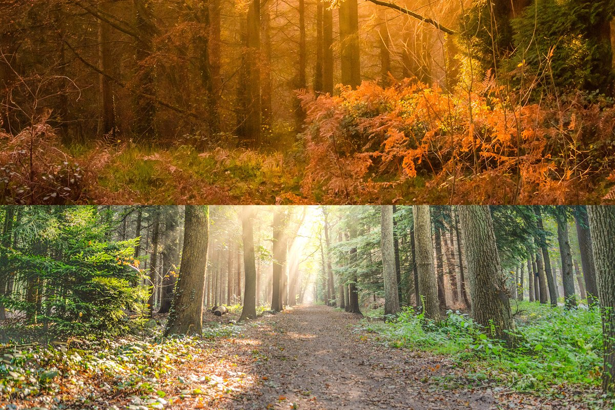 Forest/Wood Background Pack For ZOOM