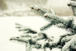 pine tree branch with snow on it