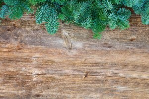 christmas fresh evergreen tree branches