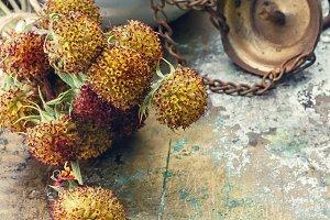 Harvesting medicine herbs