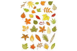 Colorful autumn leaves set