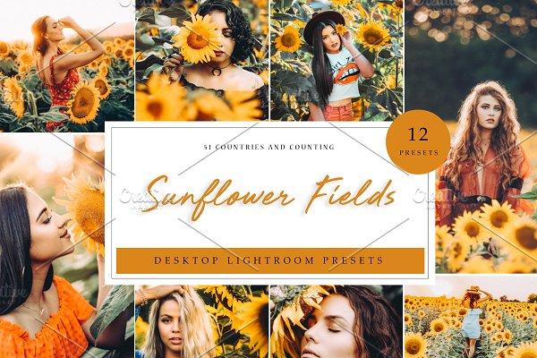 Sunflower Field Presets   Desktop