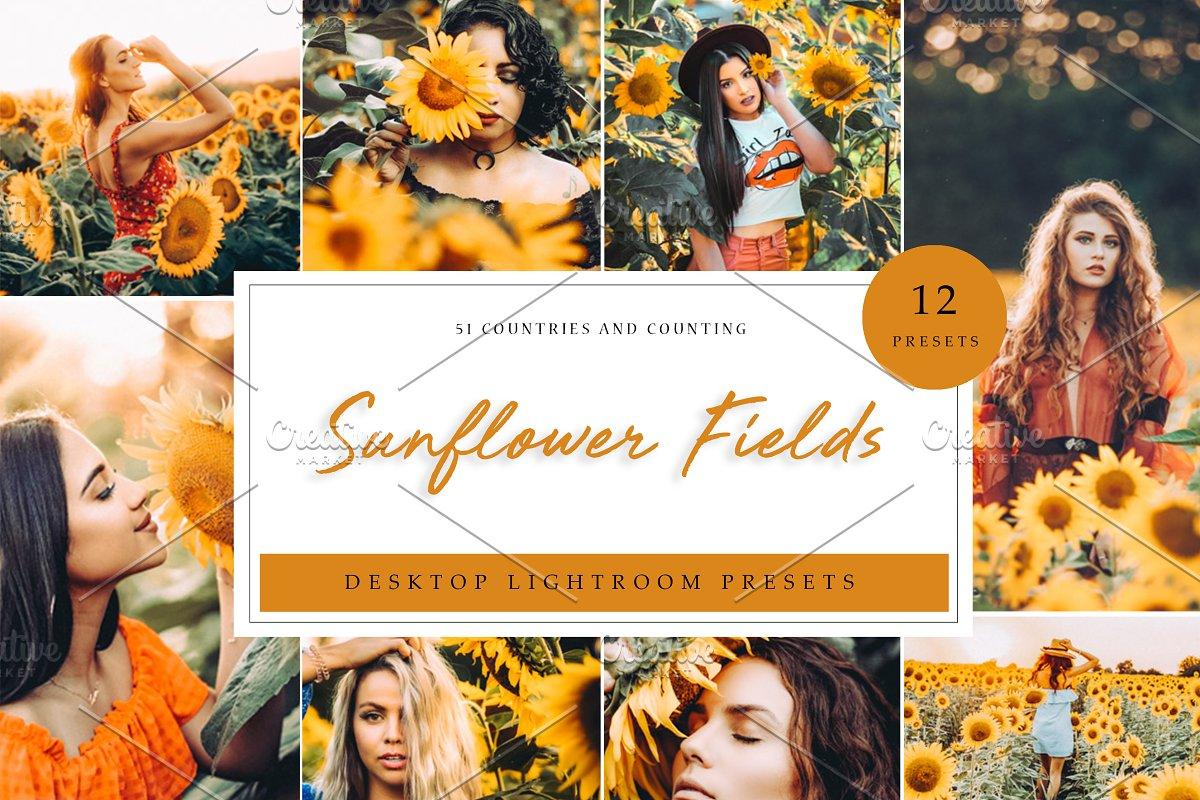 Sunflower Field Presets | Desktop