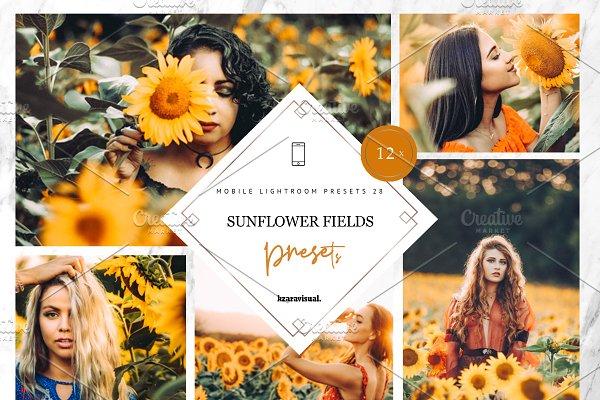 Sunflower Fields Presets   Mobile