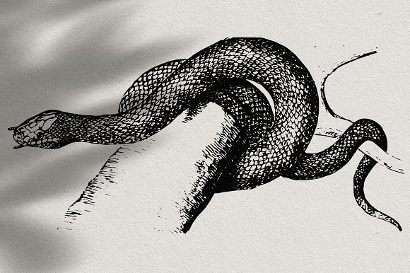 Snakes & Dragons in Illustrations - product preview 16
