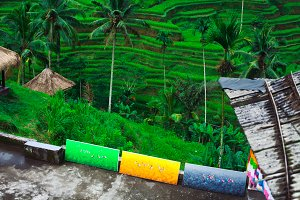 Bali Ubud. View of the rice terraces