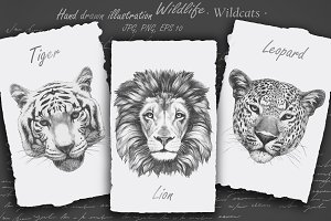 Wildlife / Wildcats