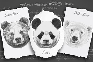 Wildlife / Bears