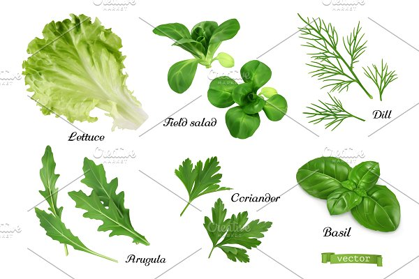 Herbs and spices. Lettuce, basil