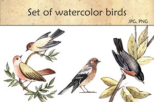 Set of watercolor birds