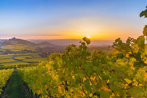 Vineyards Sunset