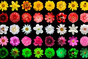 Mega pack 40 in 1 flowers isolated