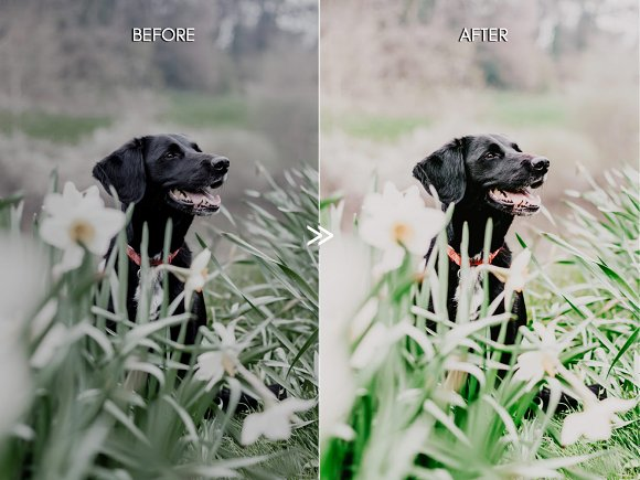 Vibrant SPRING Lightroom Presets in Add-Ons - product preview 1