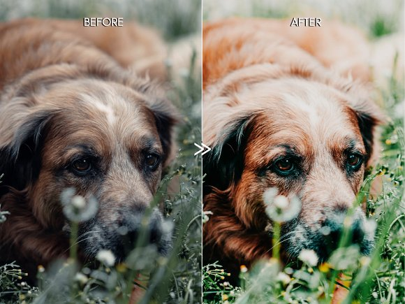 Vibrant SPRING Lightroom Presets in Add-Ons - product preview 2