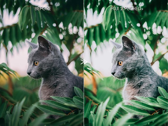 Bright Vibrant FUJIFILM LR Presets in Add-Ons - product preview 6