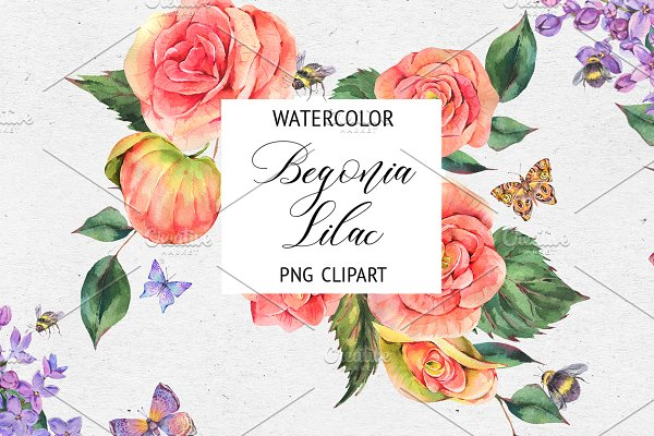 Watercolor Lilac&Begonia Clipart