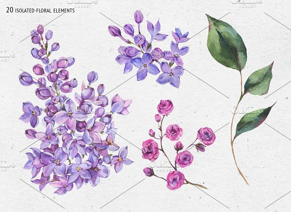 Watercolor Lilac&Begonia Clipart in Illustrations - product preview 7