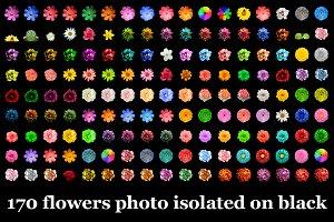 170 flowers photo isolated on black
