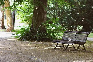 romantic bench in peaceful park
