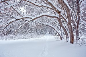 frosty snowy winter street forest