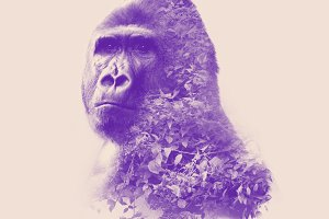 Gorilla double exposure effect