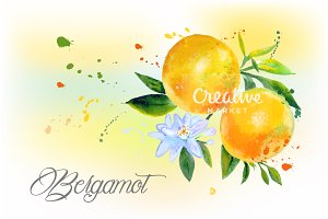 Bergamot watercolor