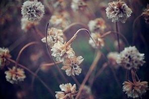 flowers low light