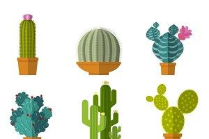 Home cactus garden